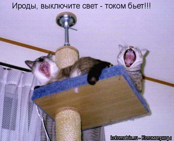 Котоматрица: Ироды, выключите свет - током бьет!!!