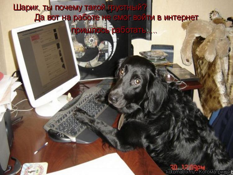 Котоматрица: Шарик, ты почему такой грустный? Да вот на работе не смог войти в интернет пришлось работать.....
