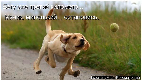 Котоматрица: Бегу уже третий километр... Мячик, миленький... остановись...