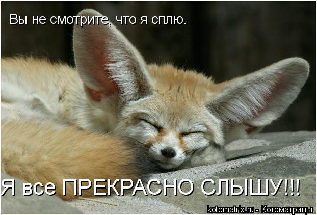 Котоматрица: Вы не смотрите, что я сплю. Я все ПРЕКРАСНО СЛЫШУ!!!