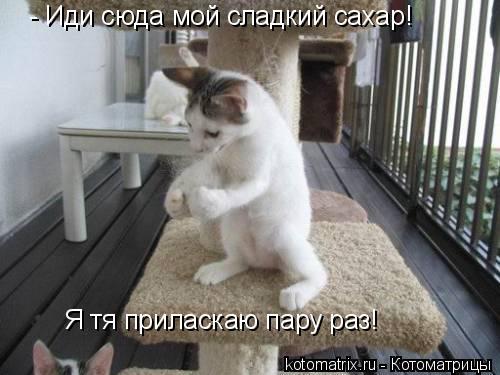 Котоматрица: - Иди сюда мой сладкий сахар! Я тя приласкаю пару раз!