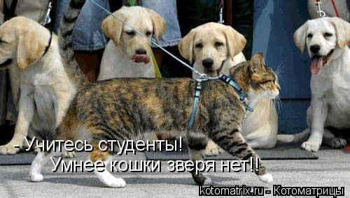 Котоматрица: - Учитесь студенты! Умнее кошки зверя нет!!