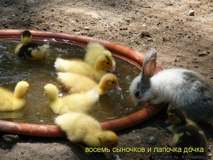 Котоматрица: восемь сыночков и лапочка дочка