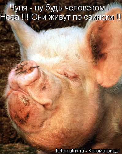 Котоматрица: Нееа !!! Они живут по свински !! Чуня - ну будь человеком !