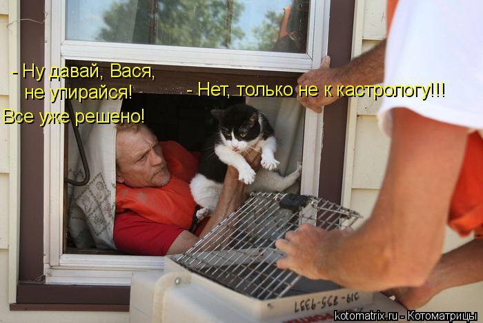 Котоматрица: - Ну давай, Вася, не упирайся! Все уже решено! - Нет, только не к кастрологу!!!