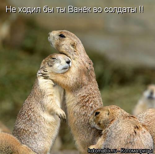 Котоматрица: Не ходил бы ты Ванёк во солдаты !!