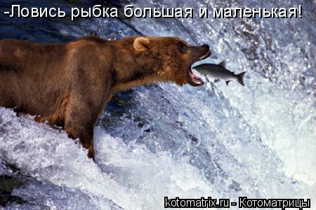 Котоматрица: -Ловись рыбка большая и маленькая!
