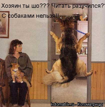 Котоматрица: Хозяин ты шо??? Читать разучился?? С собаками нельзя!!