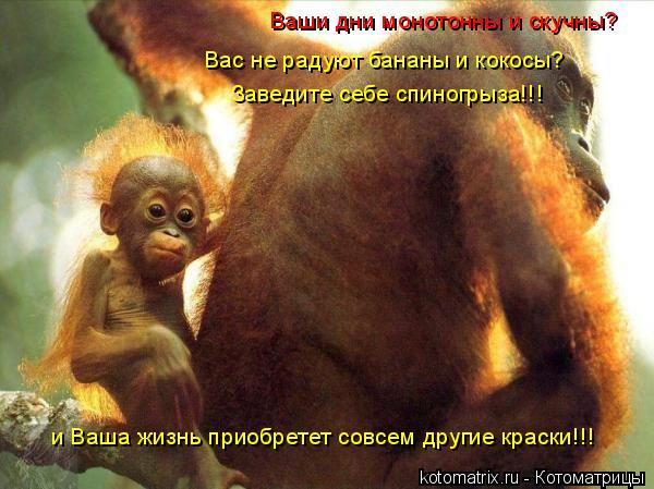 Котоматрица: Ваши дни монотонны и скучны?  Вас не радуют бананы и кокосы? Заведите себе спиногрыза!!! и Ваша жизнь приобретет совсем другие краски!!!