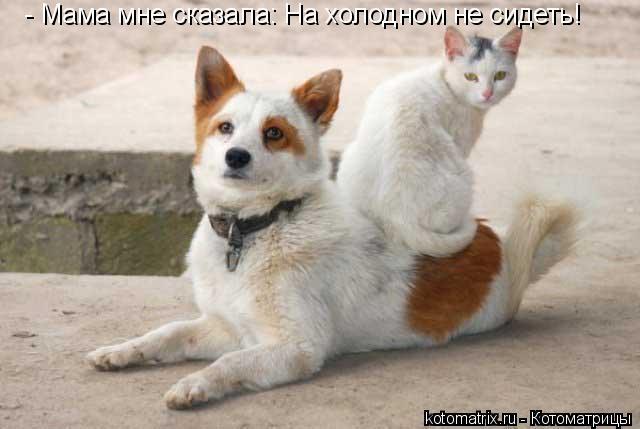 Котоматрица: - Мама мне сказала: На холодном не сидеть!