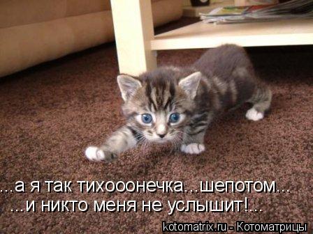 Котоматрица: ...а я так тихооонечка...шепотом... ...и никто меня не услышит!...