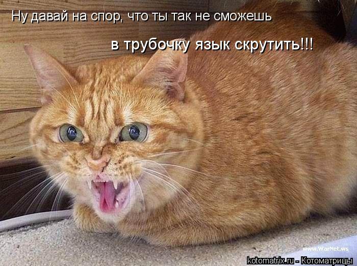 Котоматрица: в трубочку язык скрутить!!! Ну давай на спор, что ты так не сможешь