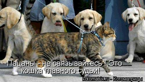 Котоматрица: Пацаны - не связывайтесь ! Это   кошка главного судьи!
