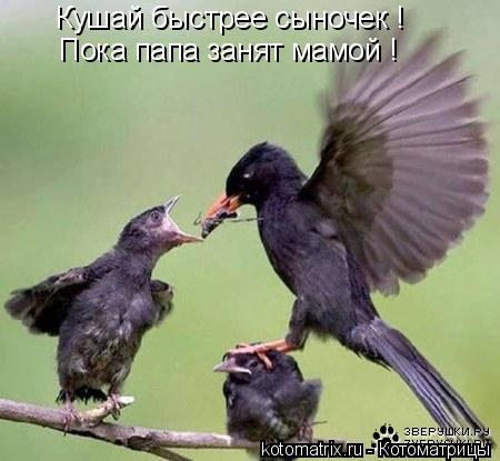 Котоматрица: Кушай быстрее сыночек ! Пока папа занят мамой !