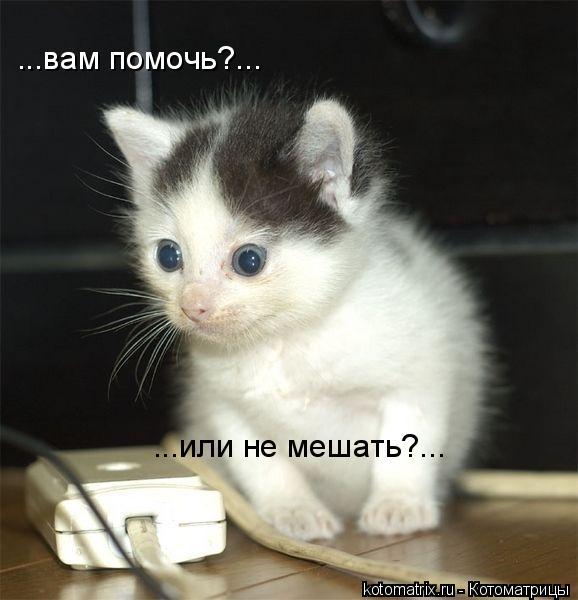 Котоматрица: ...вам помочь?... ...или не мешать?...