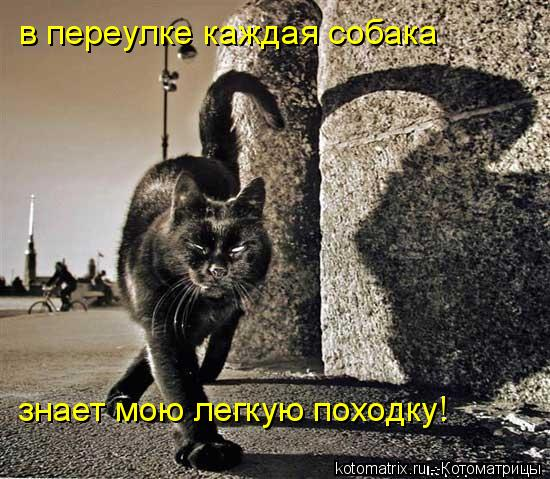Котоматрица: в переулке каждая собака знает мою легкую походку!