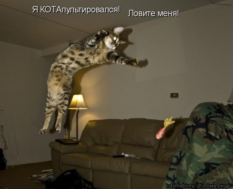 Котоматрица: Я КОТАпультировался! Ловите меня!
