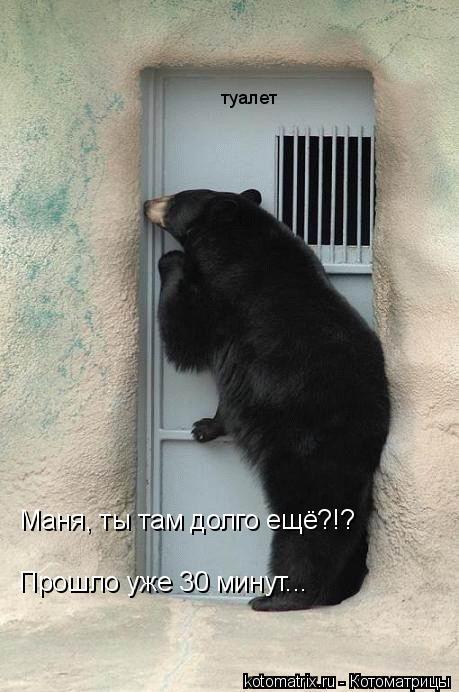 Котоматрица: Маня, ты там долго ещё?!?  Прошло уже 30 минут... туалет