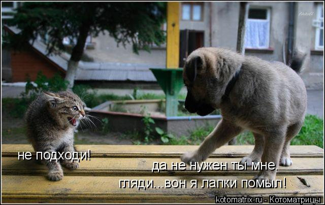 Котоматрица: не подходи! да не нужен ты мне. гляди...вон я лапки помыл!