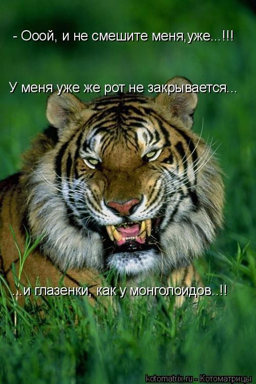 Котоматрица: - Ооой, и не смешите меня,уже...!!! У меня уже же рот не закрывается... ...и глазенки, как у монголоидов..!!