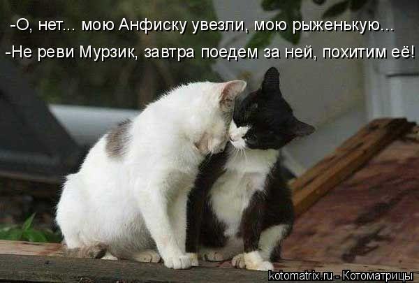 Котоматрица: -О, нет... мою Анфиску увезли, мою рыженькую... -Не реви Мурзик, завтра поедем за ней, похитим её!