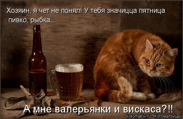 Котоматрица: Хозяин, я чет не понял! У тебя значицца пятница пивко, рыбка... А мне валерьянки и вискаса?!!