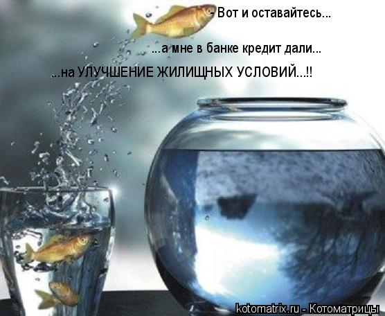 Котоматрица: - Вот и оставайтесь... ...а мне в банке кредит дали... ...на УЛУЧШЕНИЕ ЖИЛИЩНЫХ УСЛОВИЙ...!!