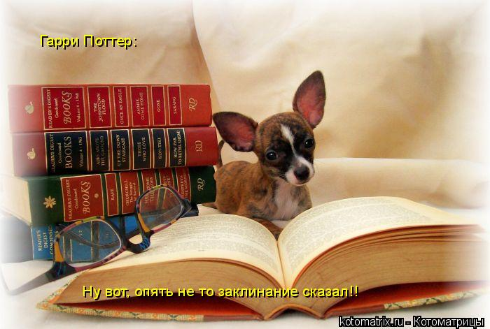 Котоматрица: Гарри Поттер: Ну вот, опять не то заклинание сказал!!