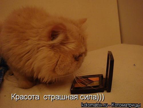 Котоматрица: Красота  страшная сила)))