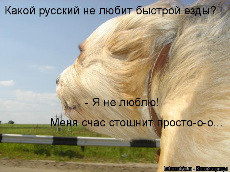 Котоматрица: - Я не люблю! Меня счас стошнит просто-о-о... Какой русский не любит быстрой езды?