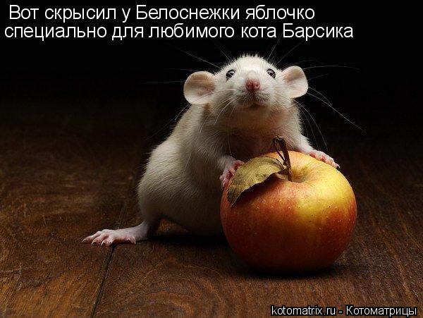 Котоматрица: Вот скрысил у Белоснежки яблочко специально для любимого кота Барсика