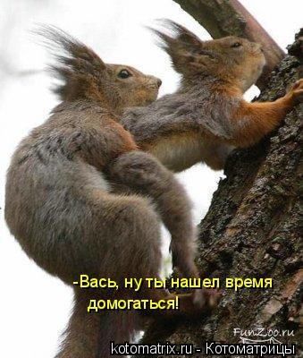 Котоматрица: -Вась, ну ты нашел время домогаться!