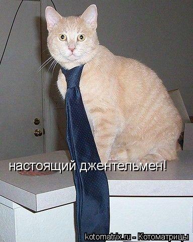 Котоматрица: настоящий джентельмен!