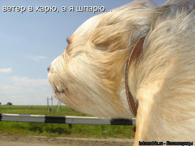 Котоматрица: ветер в харю, а я шпарю...