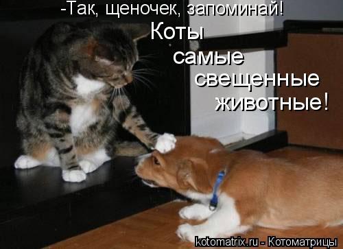 Котоматрица: -Так, щеночек, запоминай! Коты самые свещенные животные!