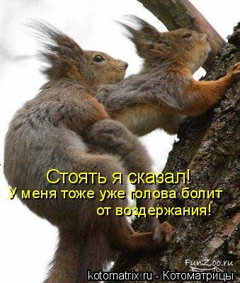Котоматрица: Стоять я сказал! У меня тоже уже голова болит  от воздержания!