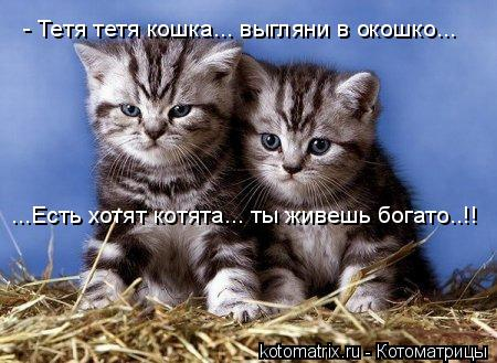 Котоматрица: - Тетя тетя кошка... выгляни в окошко... ...Есть хотят котята... ты живешь богато..!!