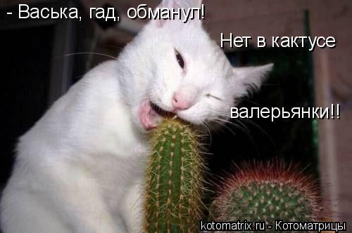 Котоматрица: - Васька, гад, обманул! Нет в кактусе валерьянки!!