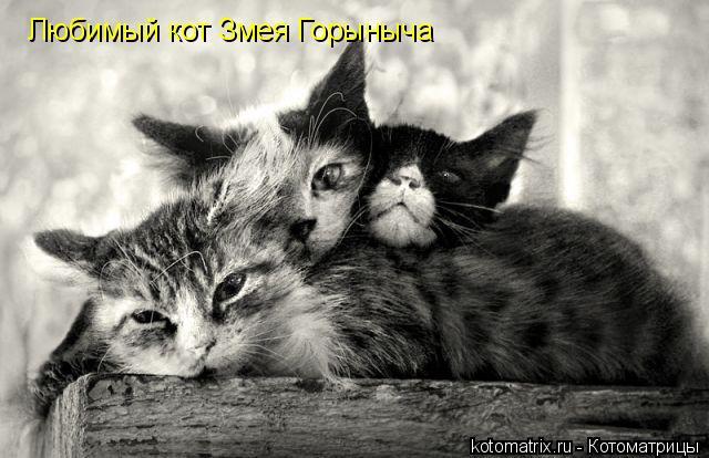 Котоматрица: Любимый кот Змея Горыныча