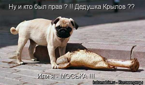 Котоматрица: Ну и кто был прав ? !! Дедушка Крылов ?? Или я - МОСЬКА !!!