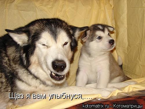 Котоматрица: Щаз я вам улыбнуся,....