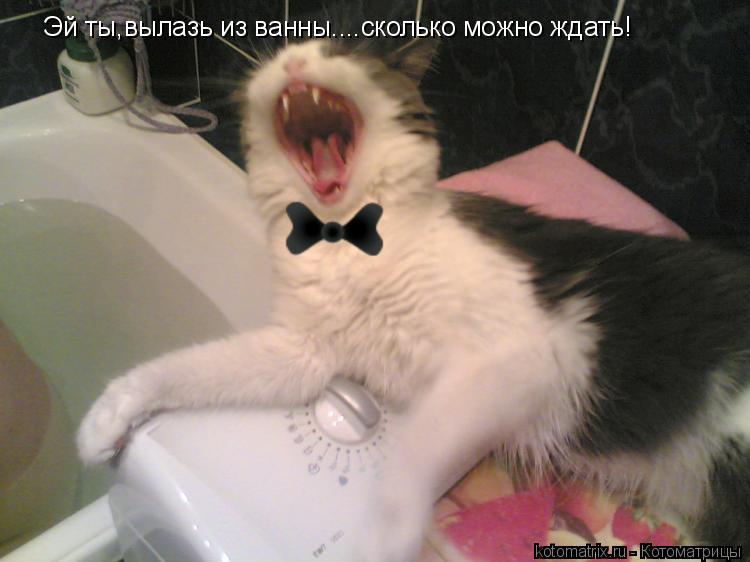 Котоматрица: Эй ты,вылазь из ванны....сколько можно ждать!