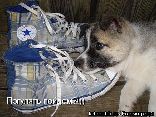 Котоматрица: Погулять пойдем?!))