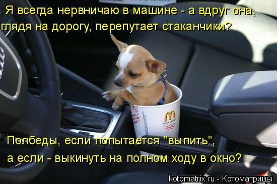 """Котоматрица: Я всегда нервничаю в машине - а вдруг она, глядя на дорогу, перепутает стаканчики? Полбеды, если попытается """"выпить"""", а если - выкинуть на полн"""