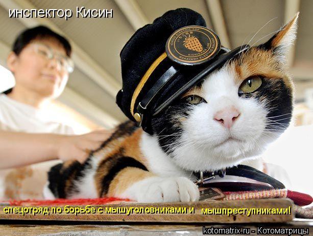 Котоматрица: инспектор Кисин спецотряд по борьбе с мышуголовниками и  мышпреступниками!