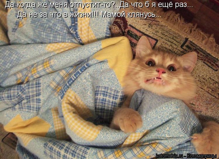 Котоматрица: Да когда же меня отпустит-то?..Да что б я ещё раз... Да не за что в жизни!!! Мамой клянусь...