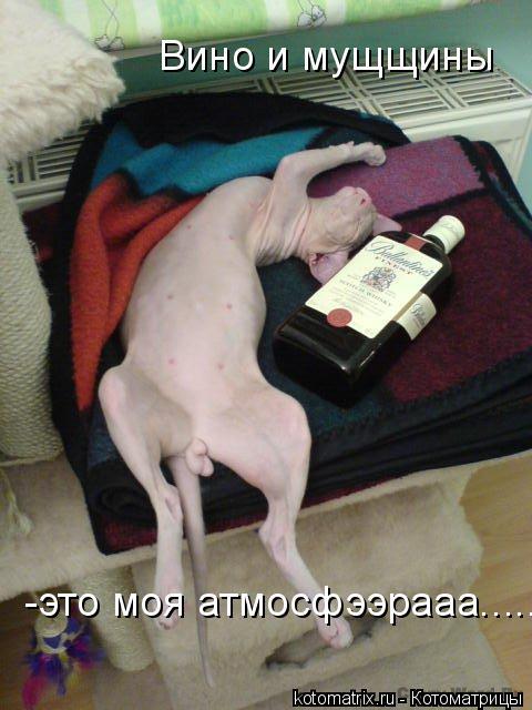Котоматрица: Вино и мущщины -это моя атмосфээрааа.......