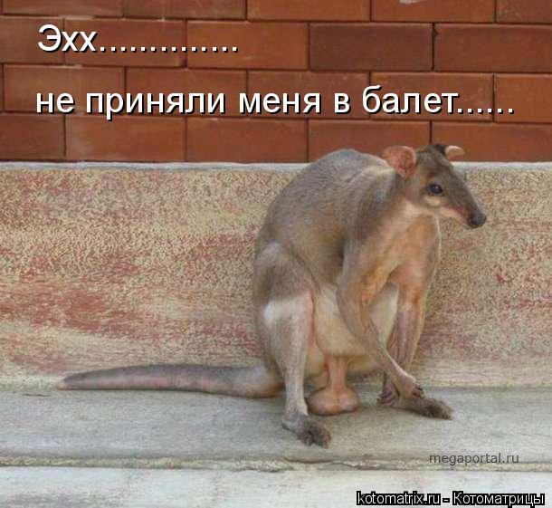 Котоматрица: Эхх.............. не приняли меня в балет......