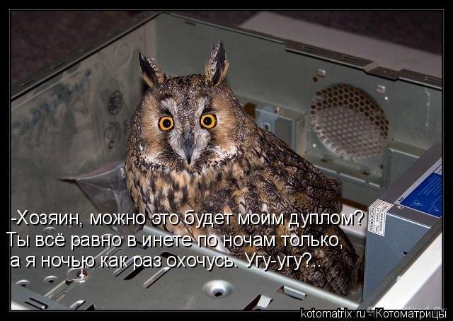 Котоматрица: -Хозяин, можно это будет моим дуплом? Ты всё равно в инете по ночам только,  а я ночью как раз охочусь. Угу-угу?..