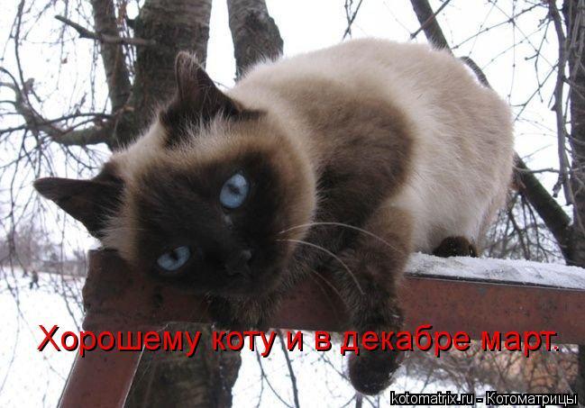 Котоматрица: Хорошему коту и в декабре март.
